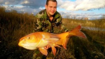 Zlata-rybka
